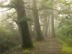 Misty forest way in japan Stock Photos