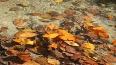 Colored autumn leaves taken away by river Stock Footage
