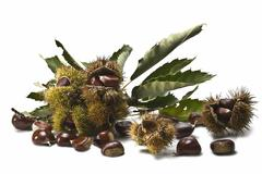 chestnuts with leaves and burs. - stock photo