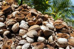 Pile of discarded coconut husks Stock Photos