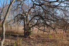 Creepy Tree - stock photo
