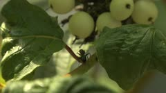 Ants 038 Stock Footage