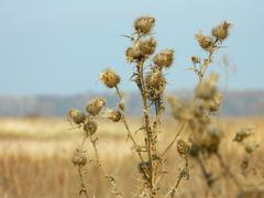 Stock Photo of autumn landscape with a thorn in the