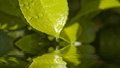 Water drop leaf Stock Photos