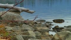 Rain Drops Softly on Rippled Lake Water on Stone and Driftwood Scenic Beach Stock Footage