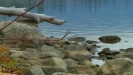 Stock Video Footage of Rain Drops Softly on Rippled Lake Water on Stone and Driftwood Scenic Beach
