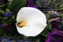 arum lily in arrangement - stock photo