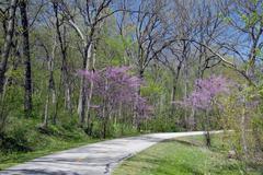 Stock Photo of bike path winding through the woods