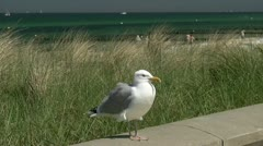 Seagull in Mecklenburg - Baltic Sea, Northern Germany Stock Footage