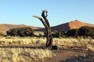 Dead trunk in namib desert namibia Stock Photos