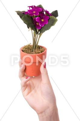 Stock photo of woman holds a flower in a pot