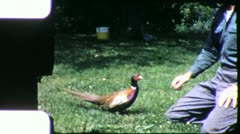 PET PHEASANT BIRD and Proud Owner (Vintage Film Old Home Movie) 5750 Stock Footage