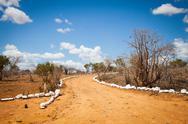 Stock Photo of savana road