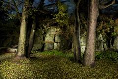 autumn forest in night-time by flash lightning - stock photo