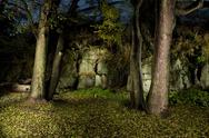 Stock Photo of autumn forest in night-time by flash lightning