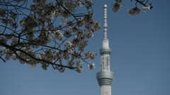 Cherry Tree Blossom, Tokyo Skytree in Japan, The Tallest Tower World Blue Sky - stock footage