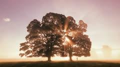 Trees at sunrise Stock Footage