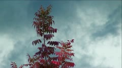 Colorful Autumn Tree in Thunder and Lightening Storm - stock footage