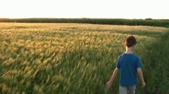 Boy Walks Next to Wheat Field at Sunset Stock Footage