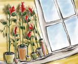Roses on the window.jpg Stock Illustration