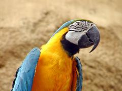 Maccaw parrot Stock Photos