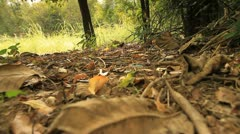 Tropical forests. Stock Footage