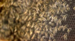 Bees making honey Stock Footage