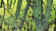 Squirrel in the woods Stock Footage