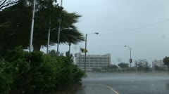 Hurricane wind surges through palm trees Stock Footage