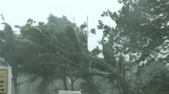 Hurricane Wind Palm Trees Stock Footage