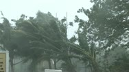 Stock Video Footage of Hurricane Wind Palm Trees