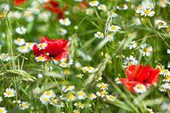 motley grass - stock photo