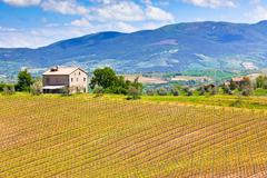 Farmhouse and vineyard landscape Stock Photos