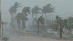 Hurricane wind blasts palm trees neighborhood flooding Stock Footage