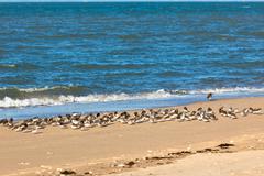 Shorebirds on a beach Stock Photos