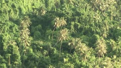 Tropical Jungle Stock Footage