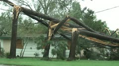 Hurricane trees snapped Stock Footage