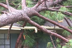 Hurricane Ivan tree crashes through a roof - stock footage