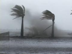 Hurricane Wave Crashes Along Shoreline with Palm Trees Stock Footage