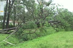 Hurricane aftermath tree across power lines - stock footage