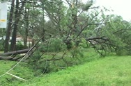 Stock Video Footage of Hurricane aftermath tree across power lines
