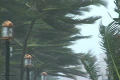 Palms in gale winds - stock footage