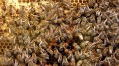 Honey bee reunion Stock Footage