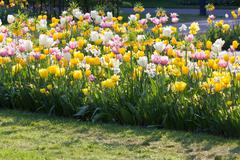 bright flowerbed - stock photo