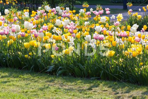 Stock photo of bright flowerbed