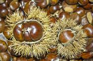 Stock Photo of Chestnuts