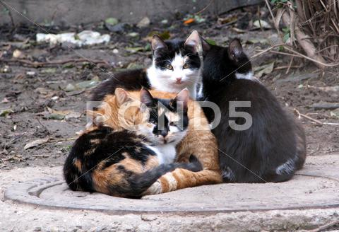 Stock photo of Homeless cats