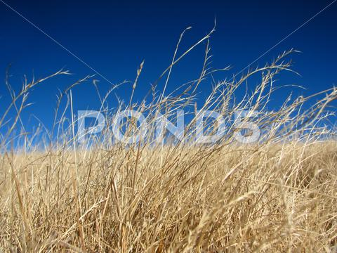 Stock photo of Dried alpine pasture