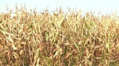 Drought Conditions - Man Reports Stock Footage