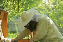 Beekeeper working in his apiary NTSC Stock Footage